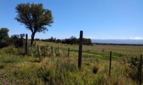 Campo de 64,5 Ha en Los Espinillos